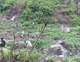 Cán bộ huyện thuê người... phá rừng