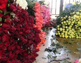 Hoa hồng Đà Lạt lên cơn sốt