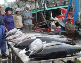 Câu cá ngừ kiểu Nhật: Điều Nhật Bản không thể chuyển giao
