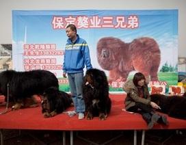 Ngao Tạng gặp hạn vì Trung Quốc chống tham nhũng