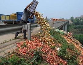 Ế ẩm, nông dân Trung Quốc đổ đào chín đầy đường