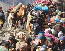 """Săn """"Đông trùng hạ thảo"""" ở Nepal"""