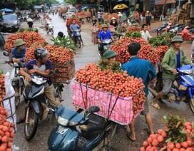 Vải đỏ đường Bắc Giang, nông dân lại bị ép giá