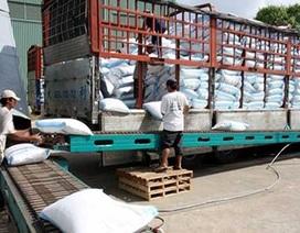 """Xuất khẩu gạo sang Trung Quốc như """"đánh bạc"""""""