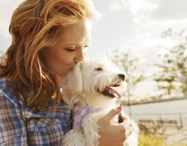 """38% người nuôi chó ở Mỹ yêu chó hơn cả """"nửa kia"""""""