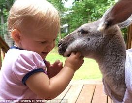 Bé và kangaroo là đôi bạn thân
