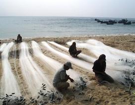 Tất bật mùa lưới 3 cảng của ngư dân vùng biển