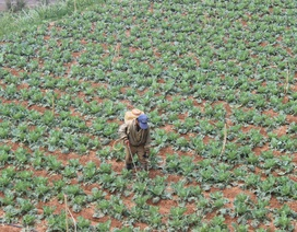 Nông sản sạch, an toàn ở Việt Nam trở nên rất hiếm