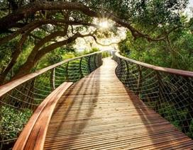TPHCM sắp có cầu bộ hành bằng gỗ do New Zealand tặng
