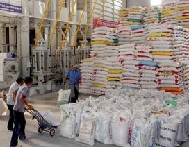 """Khối lượng tăng đột biến, xuất khẩu gạo vẫn """"ảm đạm"""""""