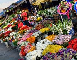 10 triệu đồng có nên đầu tư kinh doanh hoa tươi dịp Tết?