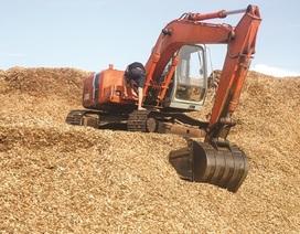"""Trung Quốc giảm nhập, doanh nghiệp xuất khẩu gỗ dăm """"lao đao"""""""