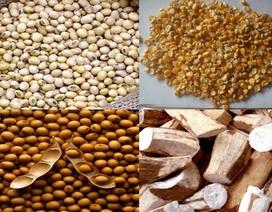 8 tháng, nhập khẩu gần 2 tỷ USD thức ăn chăn nuôi