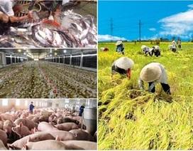 """Hội nhập TPP: Nông sản Việt """"rộng cửa"""" ra thế giới"""