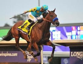 Số 1 nước Mỹ: Chú ngựa đua đoạt các giải thưởng 8,6 triệu USD