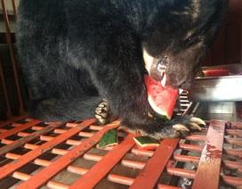 700 cá thể gấu đã chết trong năm 2014