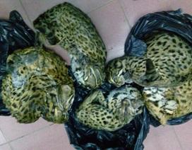 Đề nghị xử lý hình sự hành vi vận chuyển, săn bắt động vật nguy cấp