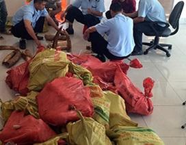 """Khởi tố vụ buôn lậu gần 3 tấn ngà voi và vẩy tê tê """"đội lốt"""" đầu cá vược"""