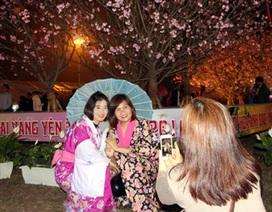 Tưng bừng Lễ hội Hoa Anh Đào - Mai Vàng Yên Tử