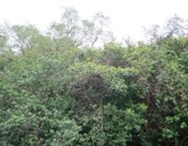 Cò đang dần vắng bóng ở đầm Hà Côộc
