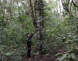 Có một khu rừng nguyên sinh giữa đồng bằng