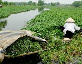 100% mẫu rau muống tại sông Nhuệ nhiễm chì