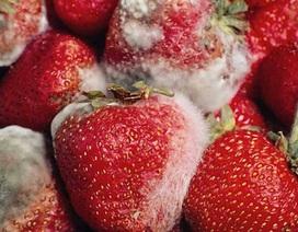 Khử trùng, bảo quản hoa quả không cần hóa chất