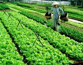 Không phun thuốc trừ sâu lấy đâu rau ăn?
