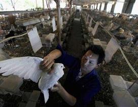 Sắp có vắc xin cúm A/H7N9 trên người