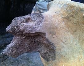 Phát hiện xương lạ khổng lồ ở Hà Tĩnh