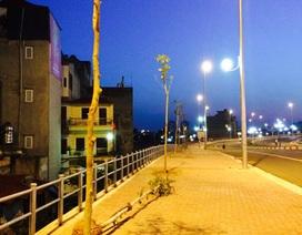 Vụ cây xanh chết khô bên cầu Nhật Tân: Trồng lại hàng cây mới
