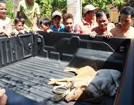 Trộm chó dù dưới 2 triệu đồng vẫn bị xử lý hình sự