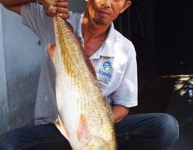 Xe buýt Hà Nội tông xe máy trong hầm, ngư dân Khánh Hòa câu được cá lạ