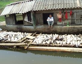 Bộ Tài nguyên và Môi trường thanh tra toàn diện việc xả thải ra sông Bưởi