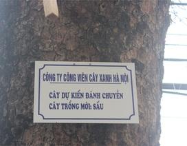 Hà Nội: Đã treo 70 biển trưng cầu ý kiến người dân về thay thế cây xanh