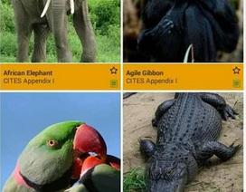 Bảo vệ động vật hoang dã qua ứng dụng trên điện thoại di động