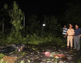 Hà Nội: Trắng đêm khắc phục sự cố mưa giông