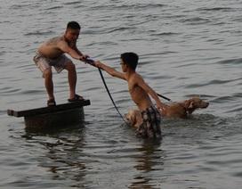 """Trời oi bức, thanh niên rủ nhau đưa thú cưng ra hồ Tây... """"giải nhiệt"""""""