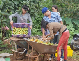 Trang Trần nghỉ bán bún đậu lên cao nguyên làm nông dân