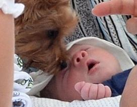 Cậu nhóc 10 ngày tuổi của Simon Cowell đã làm quen với cún!