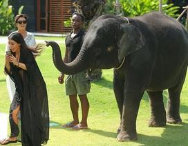 Kim bỏ chạy vì bị voi…. chọc ghẹo