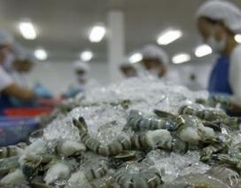 VASEP: Mỹ kiện tôm Việt Nam là cạnh tranh không lành mạnh và thiếu cơ sở