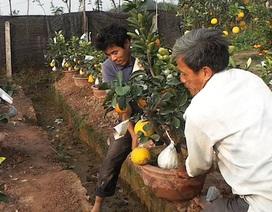 Chiêm ngưỡng cây có 9 loại quả của lão nông Hà Nội