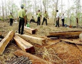 Xử nghiêm vụ lâm tặc tông chết kiểm lâm ở Lâm Đồng