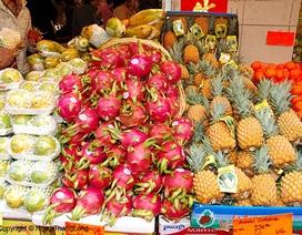"""Hoa quả Việt sẽ không phải lo """"ế"""" đầu ra?"""