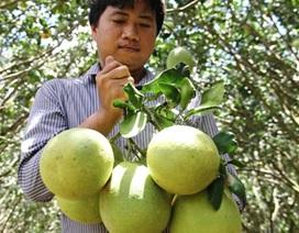 Nguy cơ khan hiếm trái cây phục vụ Tết!