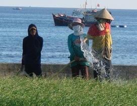 """Giếng nước """"khủng"""" trên đảo Lý Sơn"""