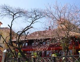 Nắng đẹp, Sa Pa hút du khách những ngày đầu năm