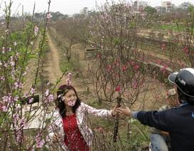 Chợ hoa trong vườn đào Nhật Tân