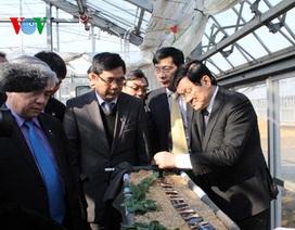 Hoạt động của Chủ tịch nước trong ngày đầu tại Nhật Bản